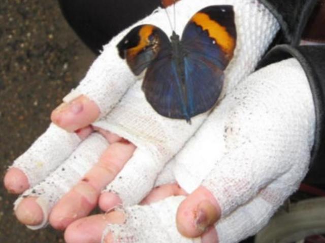 + Best Papír pillangók és minden más pillangó images in   papír, pillangó, kreatív