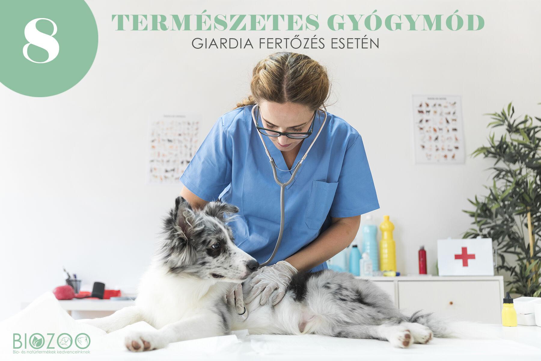 giardia kutya fertőző ember)