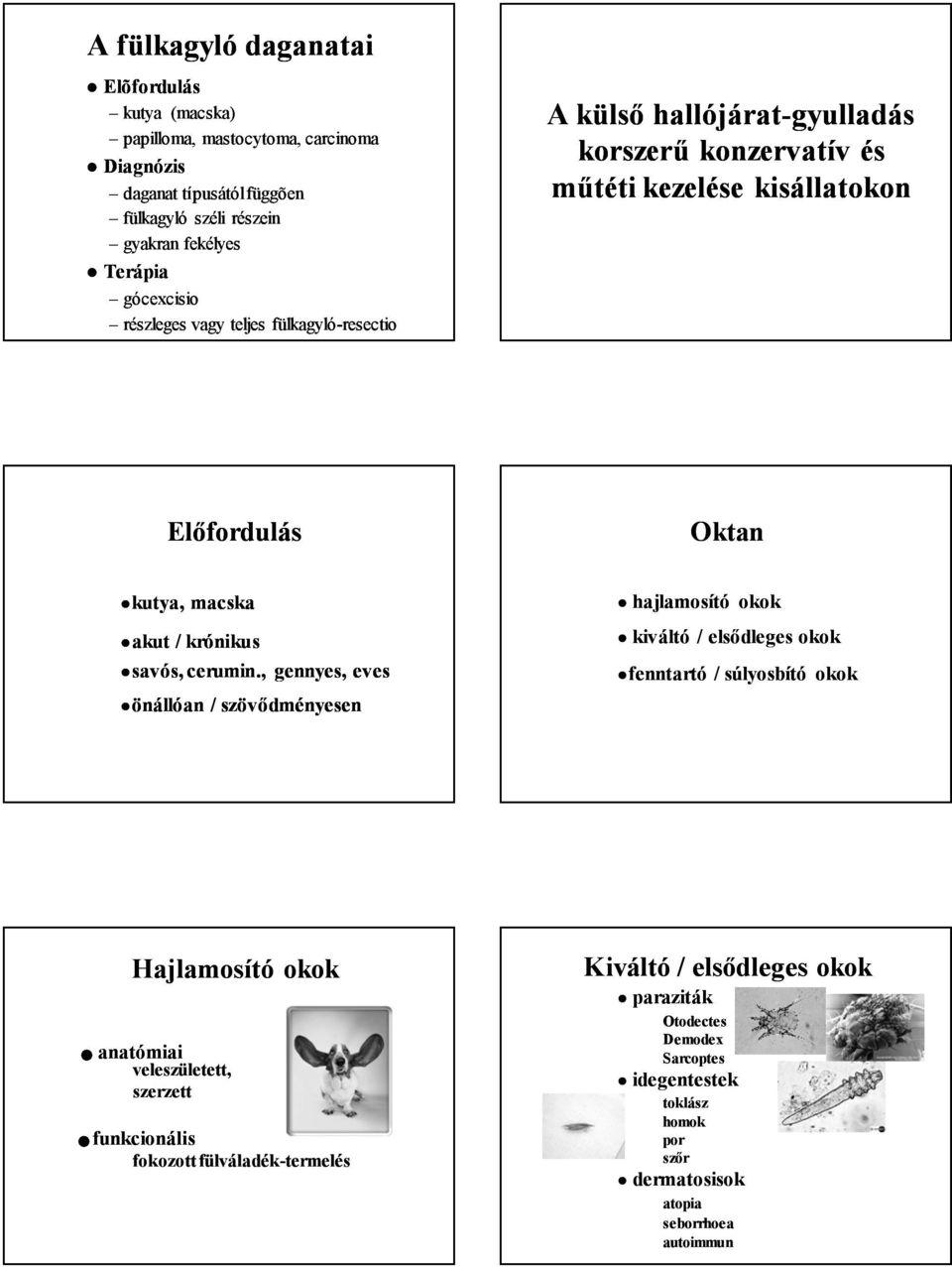papillómák és paraziták