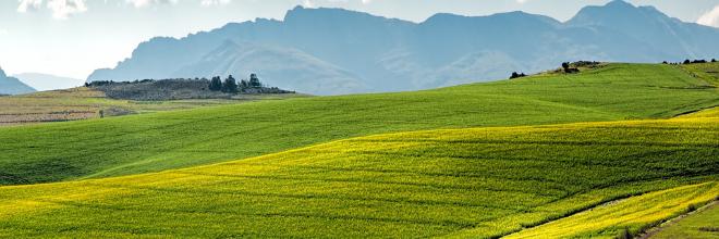 Növényvédelem   Digitális Tankönyvtár