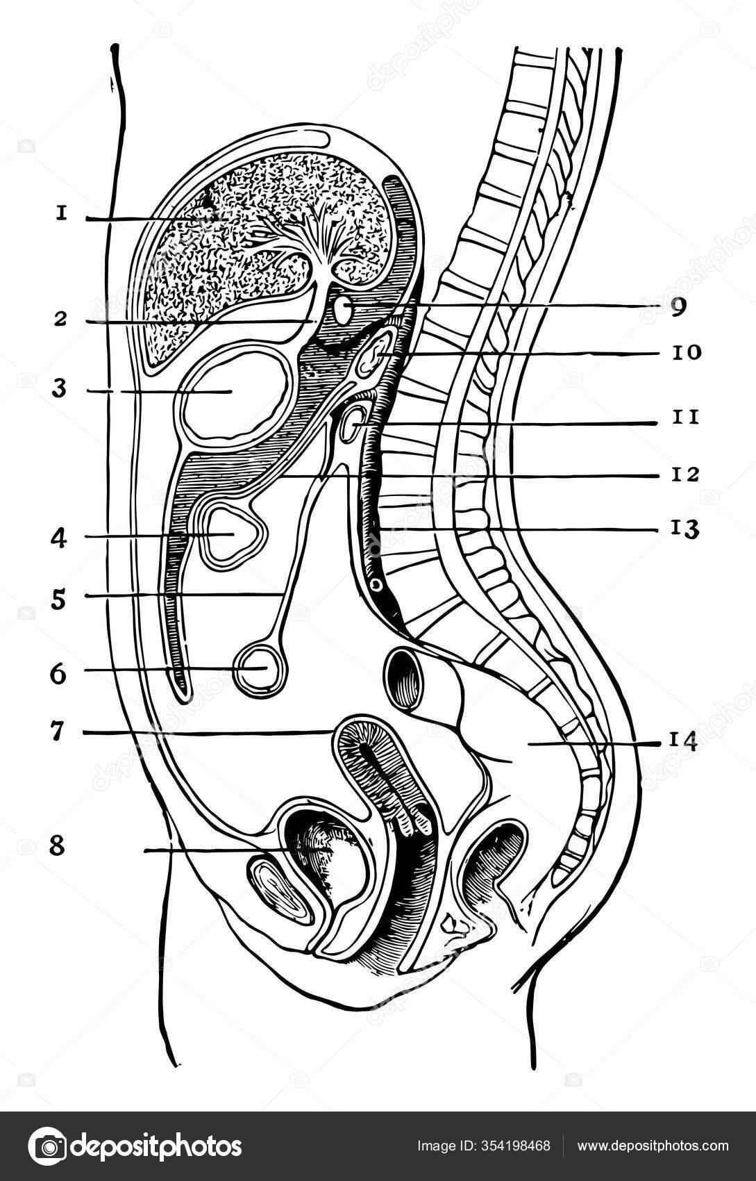 peritoneális rák nz)