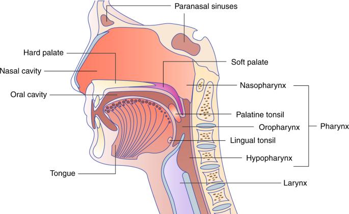 hpv sinus tumor)