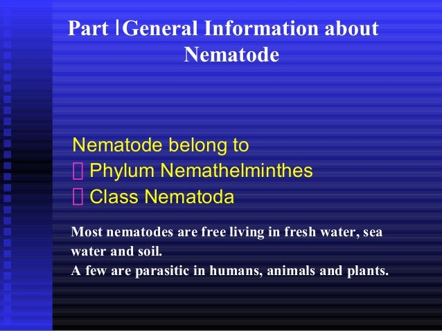 Klassifikasi nemathelminthes ppt. Nemathelminthes adalah