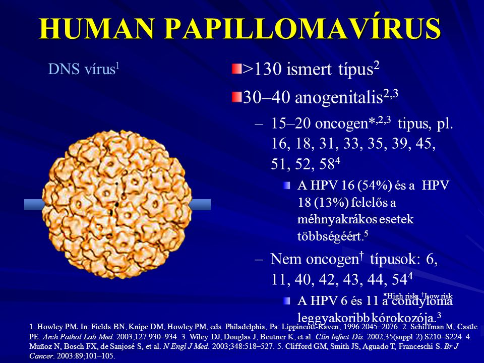 papilloma típusok)