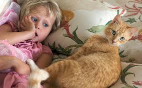 Toxoplasma - a kismamák réme? | Csalákarpitosrugo.hu