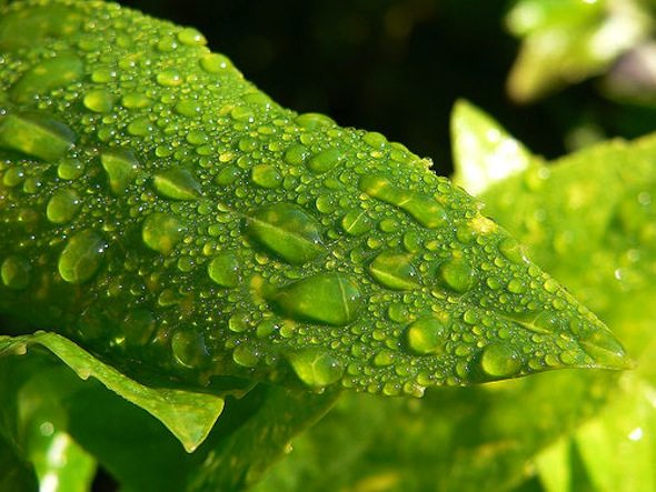 méregtelenítés zöld lével