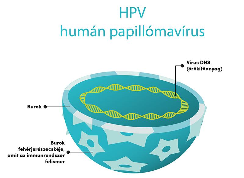 papilloma vírus csókok