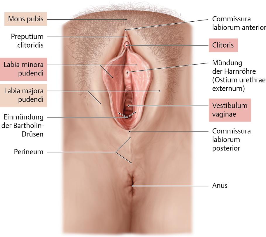 a fityma genitális szemölcsei papilloma vírus fórum
