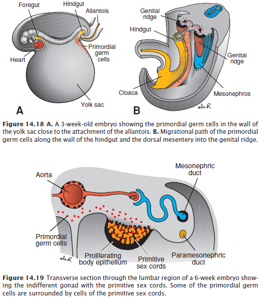 genitális szemölcsök fertőzésének módjai)