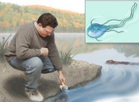 irodai parazita hogyan lehet visszavonulni amikor a szemölcsök megkeményednek