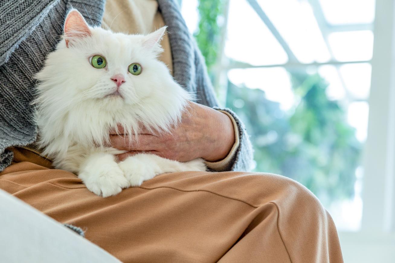 macska tabletták férgek után papaya férgek kezelése