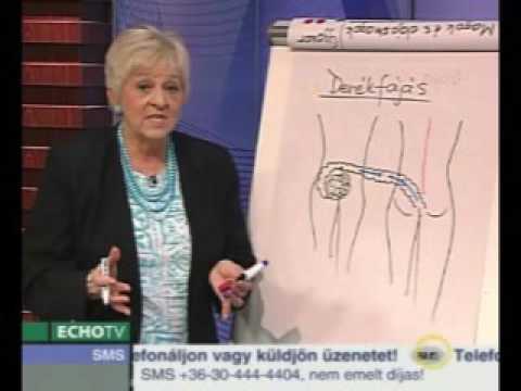 a gazda parazita kapcsolata a helmintusokban)