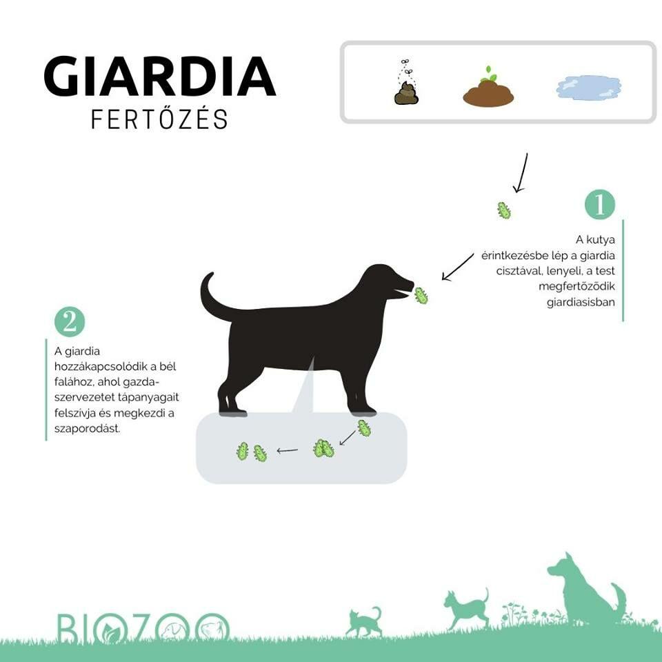 giardia ember természetes gyógymódjai a parazitaellenes szer összetétele