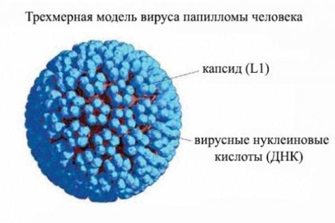 Az óvszer nem véd a HPV ellen   karpitosrugo.hu