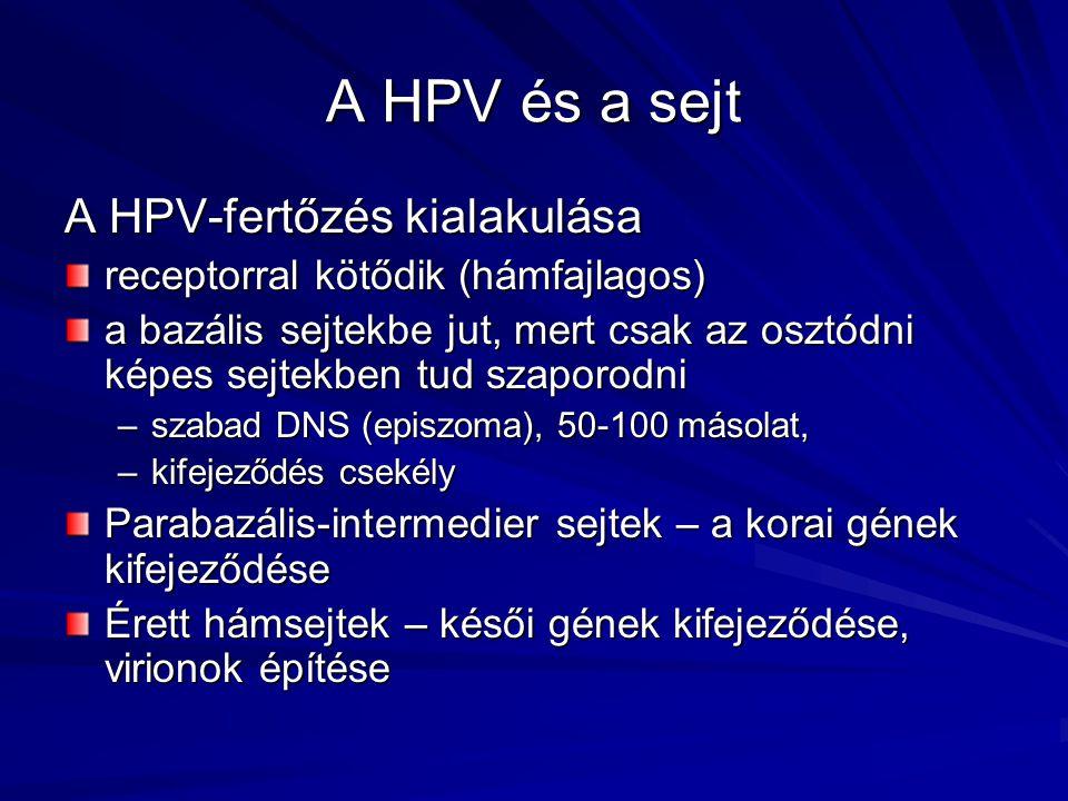 kimutatási papilloma vírus