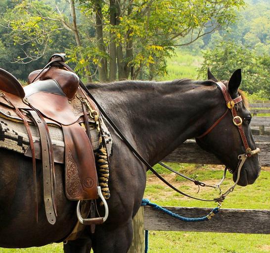 a papillomatosis kezelése lovakon