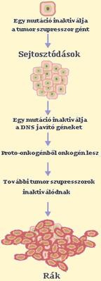 a hashártya rák gyógyulási aránya