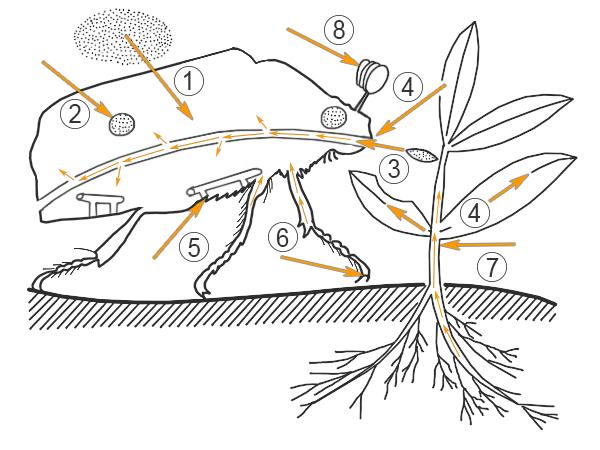 rovarölő peszticidek és riasztók