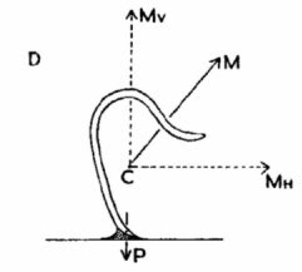 pinworm életciklus humán papilloma vírus papovírus