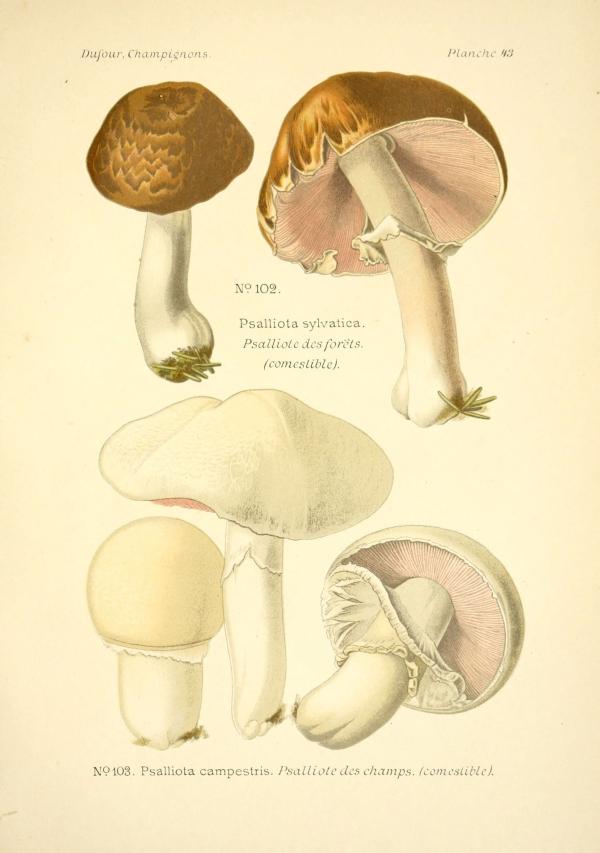 régi gombák bevált gyógyszer férgek ellen