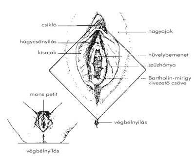 a női condyloma betegségei)
