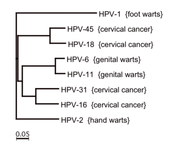 Papillomavírus inkubáció Pinwormák a csecsemők kezelésében