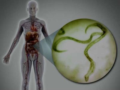 hpv vírus gaat niet weg féreg reprodukció