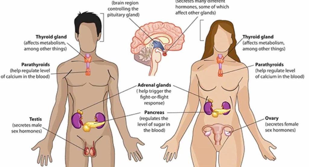 Hormonális rendszer betegsége - Budai Endokrinközpont