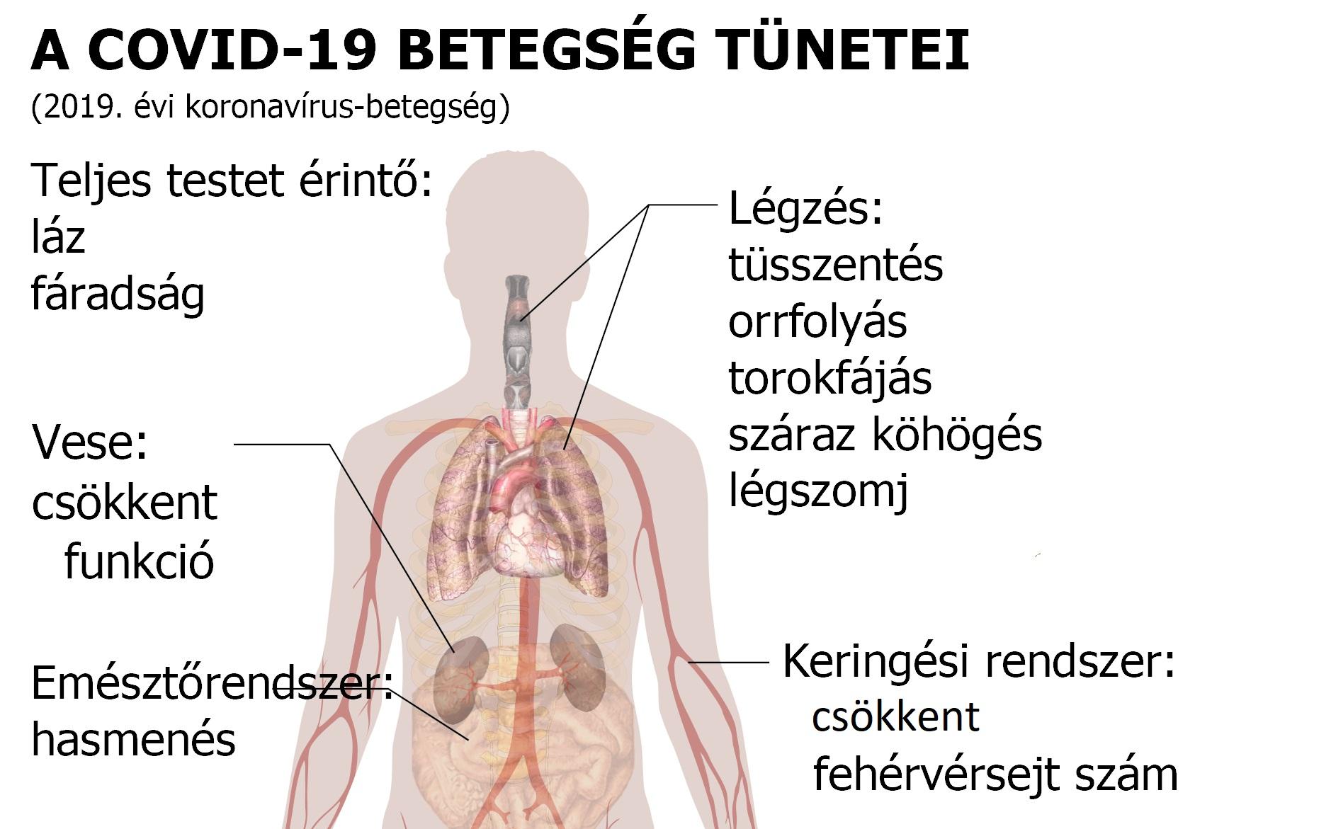 paraziták tünetei az emberi test kezelésében