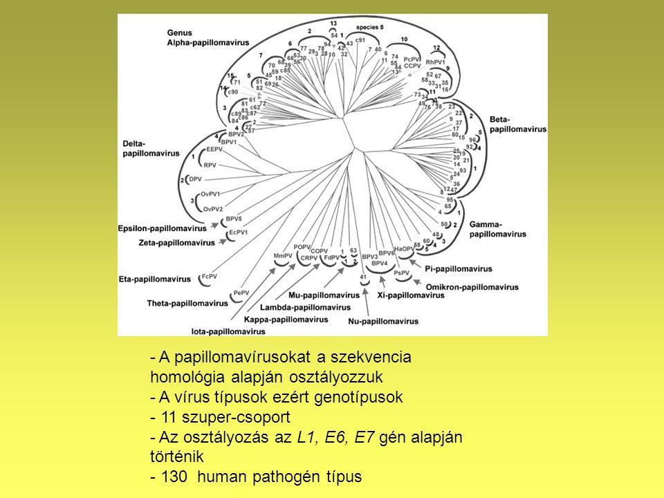 humán papillomavírus genotípusok