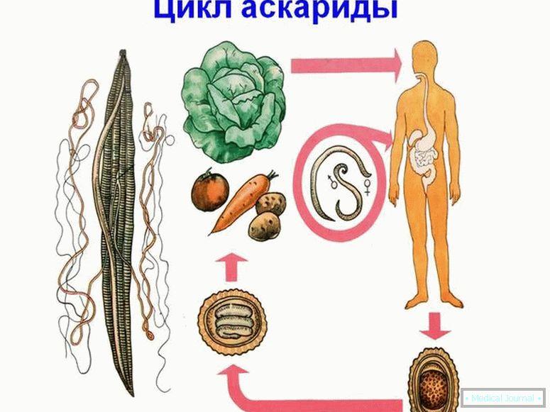 patogén fertőzés