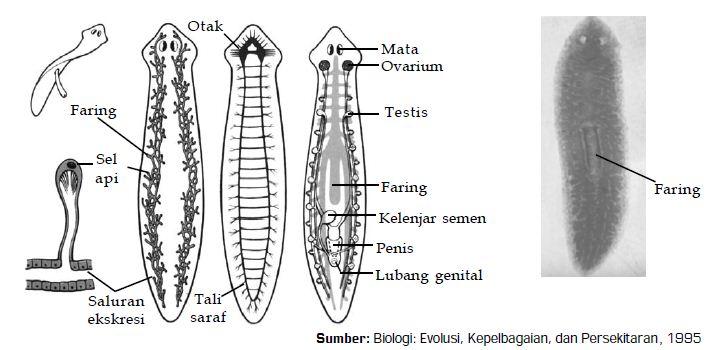 különbségek a papillómákban és szemölcsökben prosztatarák 2. stádium