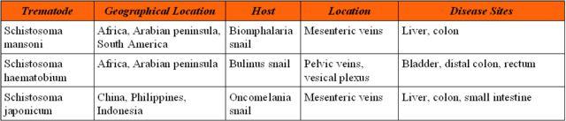 Schistosomiasis paraziták