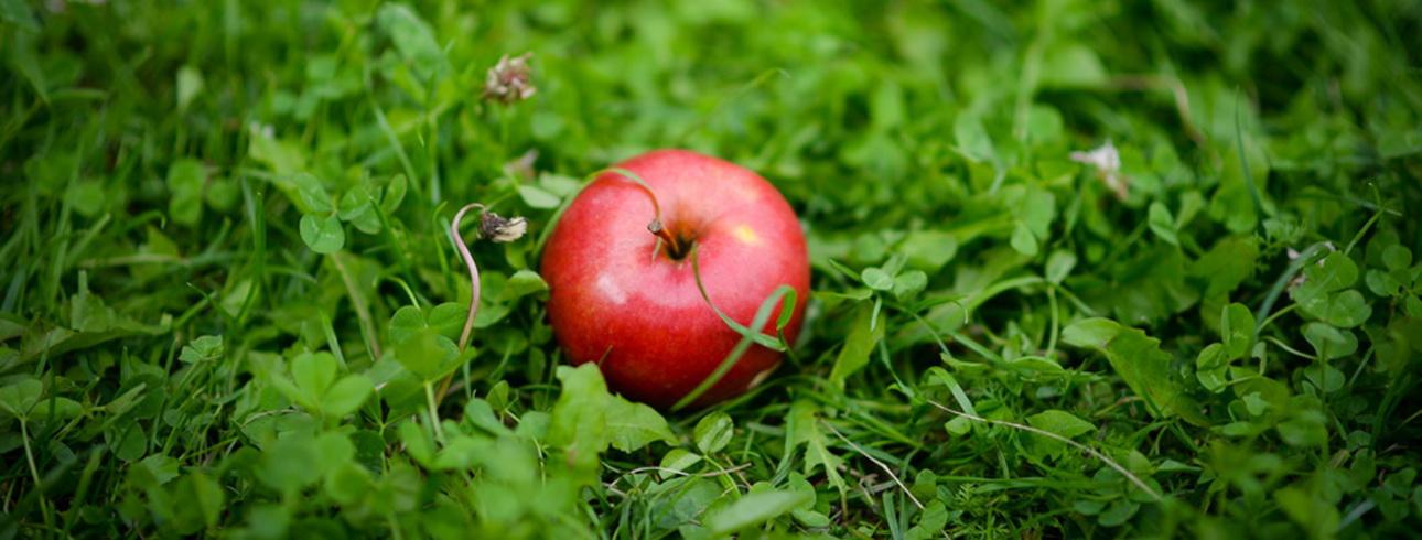 gyümölcslevek a méregtelenítésben)