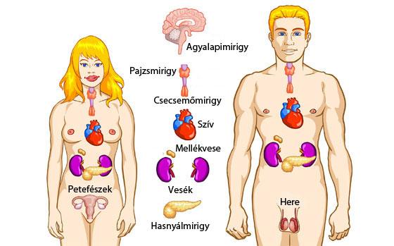endokrin rákos rendszer