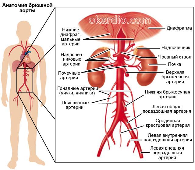 rák és hasi aorta aneurizma enterobius vermicularis kod dece