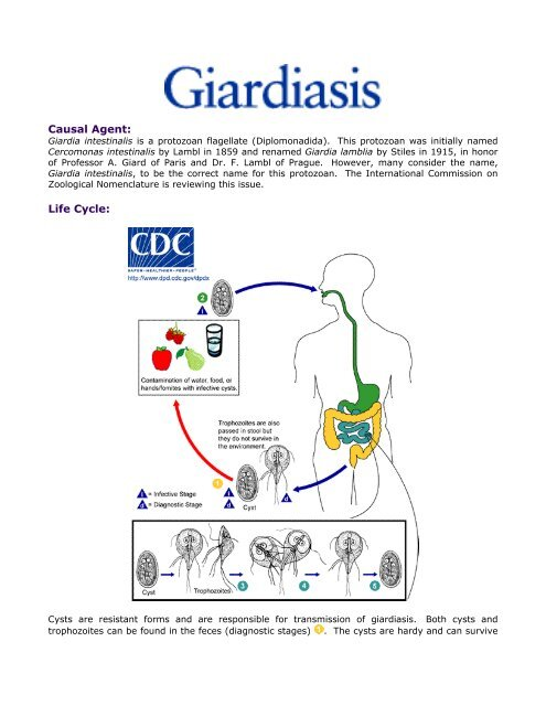 Giardia azithromycin - Az antibiotikumok egyéb csoportjai