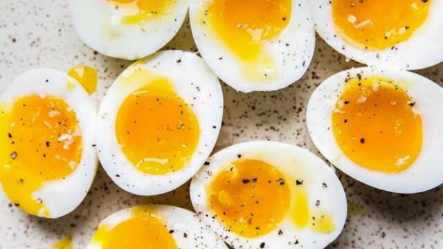tojásfejlődési tipp vastagbél méregtelenítő hollywood florida