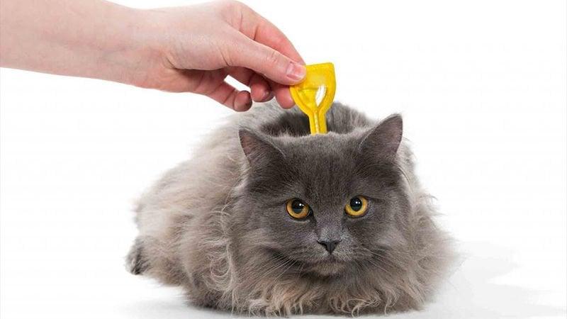 Kedi İç-Dış Parazit