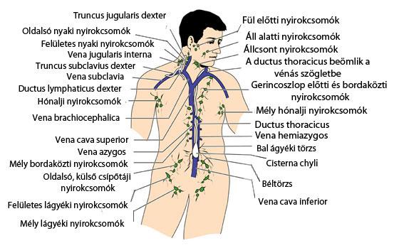 áttétes rák nyirokcsomók