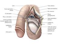 a fityma genitális szemölcsei cink kenőcs papilloma vélemények