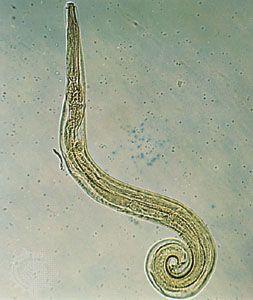 pszichoszomatikus pinworm