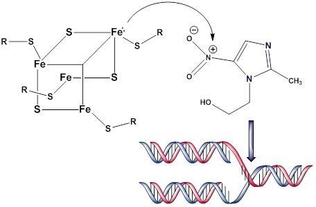 Giardia azithromycin,