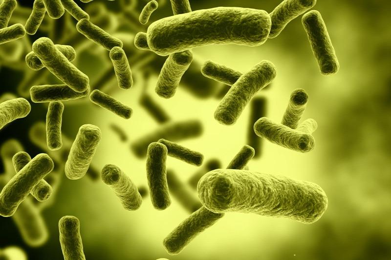 baktériumok meghatározása