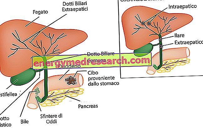 OTSZ Online - Aszpirin és a biliáris traktus daganatai