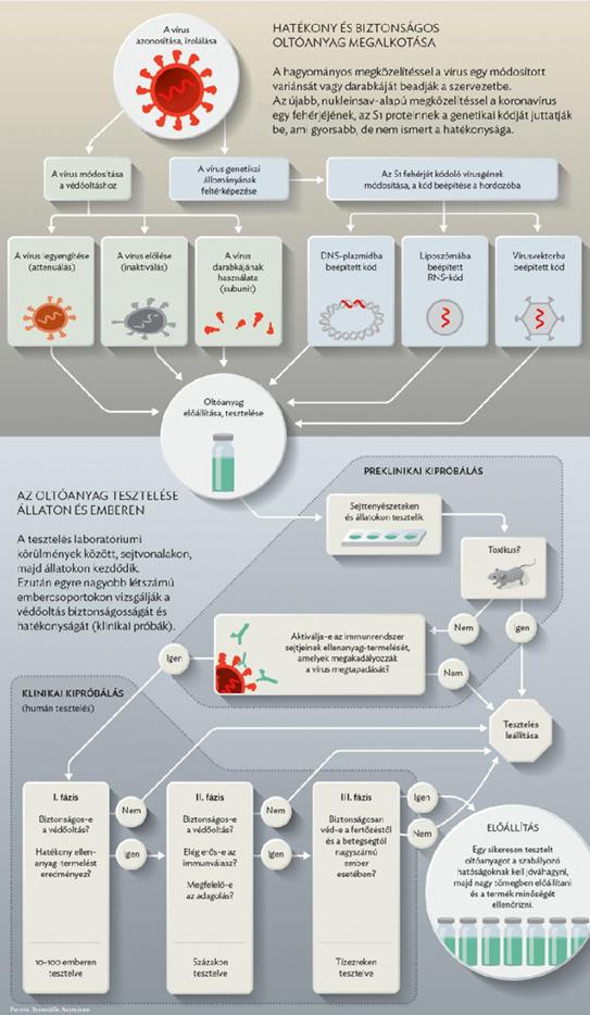 papilloma vakcina vírus korlát és)
