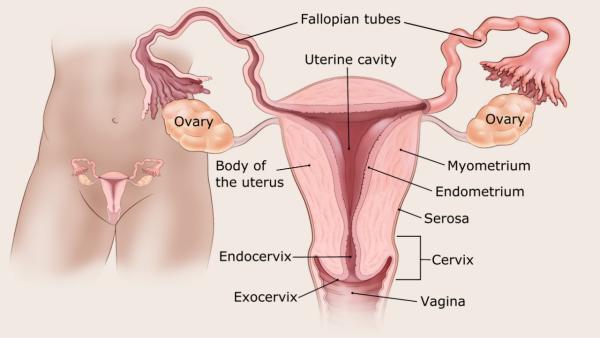endometrium rák iránymutatás)