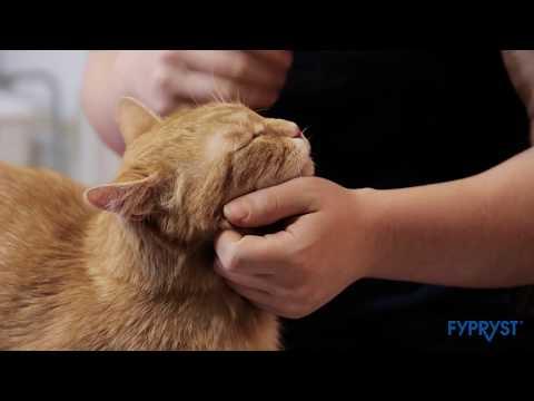 giardia fertőzés macskák között