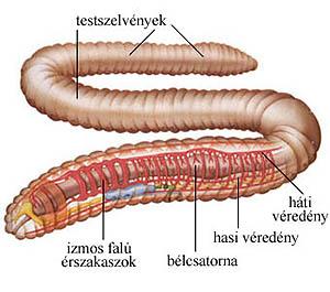 Biológia - évfolyam | Sulinet Tudásbázis