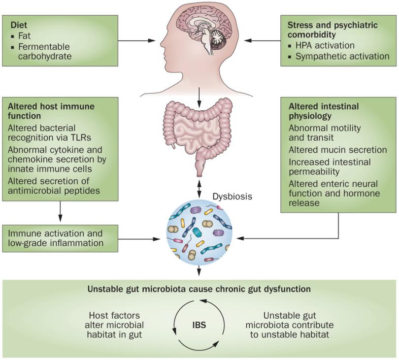 gerd dysbiosis